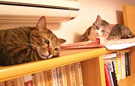 本棚の上で5