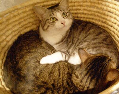 籠の中の猫は?8