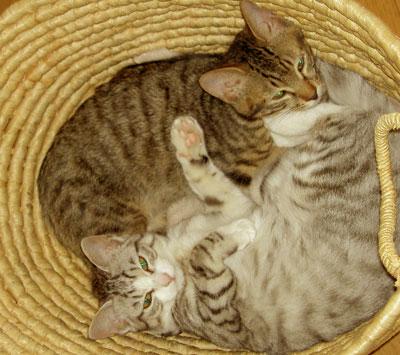 籠の中の猫は?9