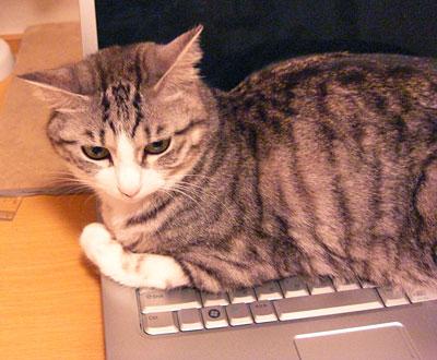 ナナはパソコン大好き1