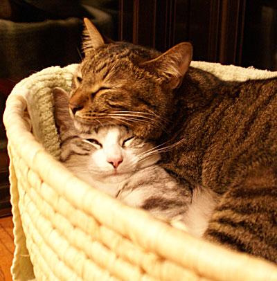 一緒におやすみ2