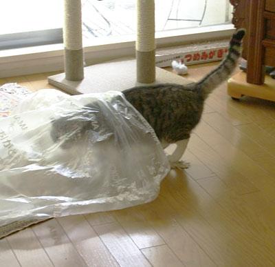 おっきなビニール袋7