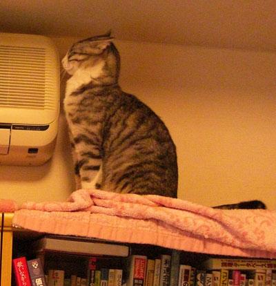 本棚のナナとマロン5