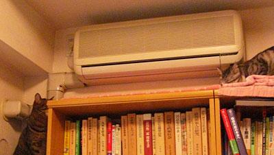 本棚のナナとマロン9