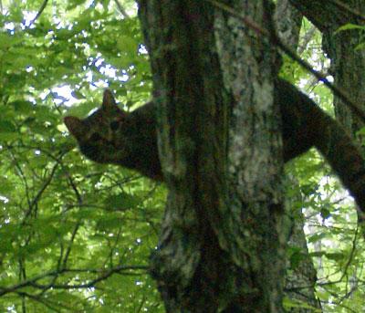 木登りマロン2