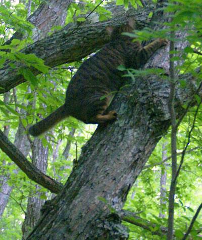 木登りマロン3