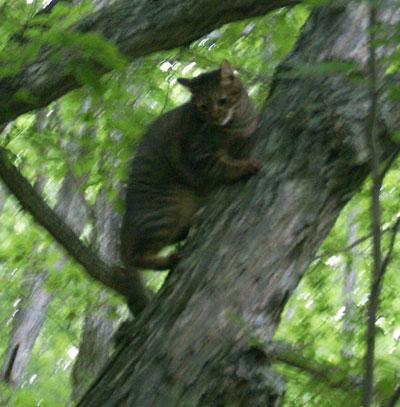 木登りマロン4