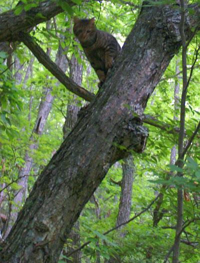 木登りマロン5