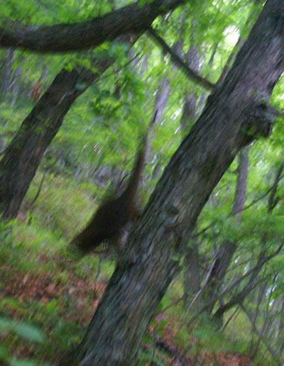木登りマロン6