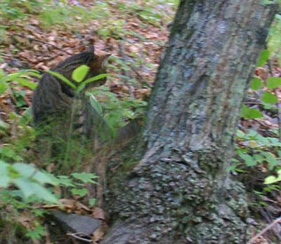 木登りマロン7