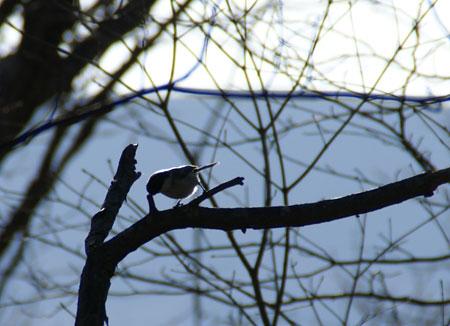 お山の小鳥さん2