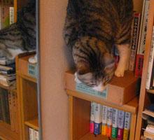 大好きな本棚の右端5b