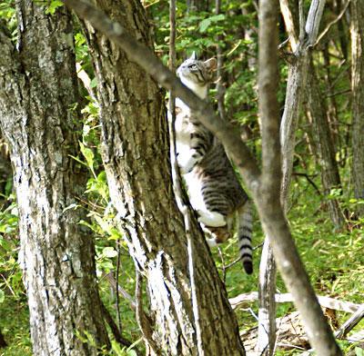 木登りad2d