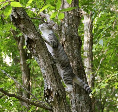 木登りad2j