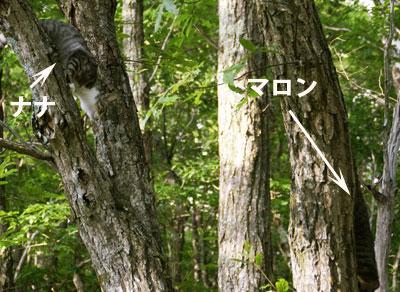 木登りad2l