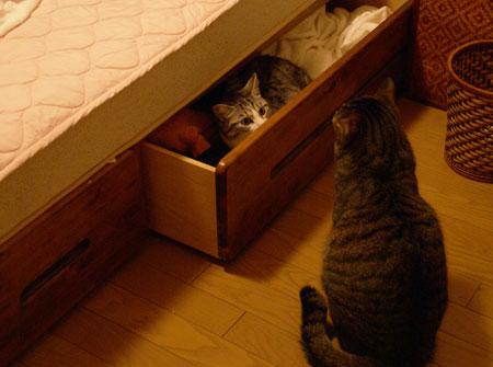 ベッドの引き出し1