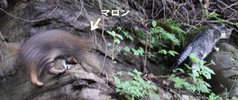洞窟探検4