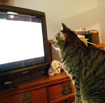 昼間のテレビ2