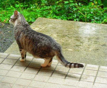 今朝は雨・・・4