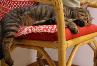 マロンの昼寝5