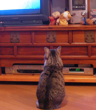 ナナとテレビ1