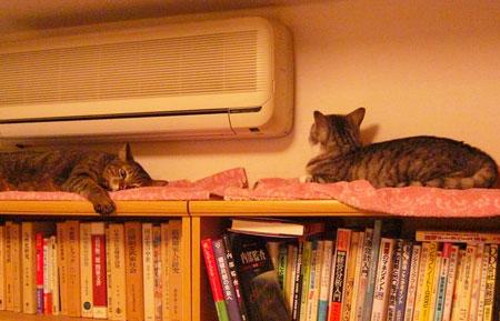本棚の上で・・・1