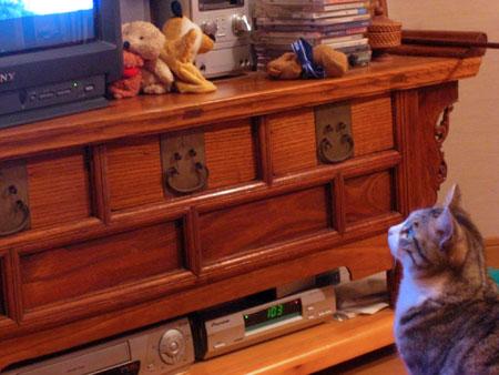 ナナとテレビ2