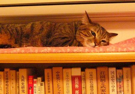 本棚の上で・・・2