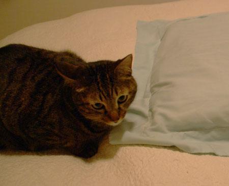 またまた、マロンと枕3