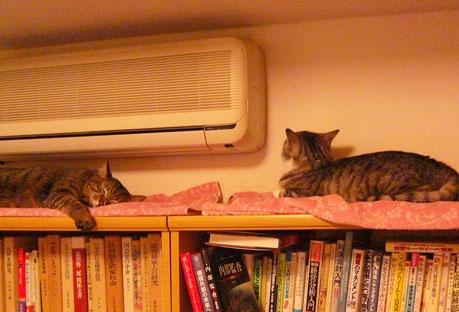 本棚の上で・・・4