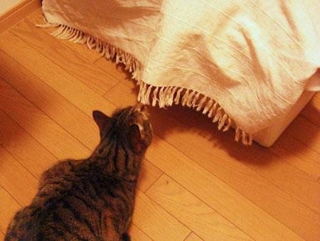 ベッドカバーの下のナナ1