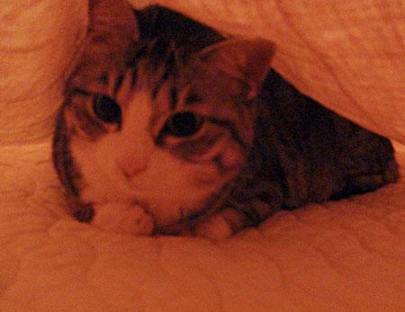 ベッドカバーの下のナナ8