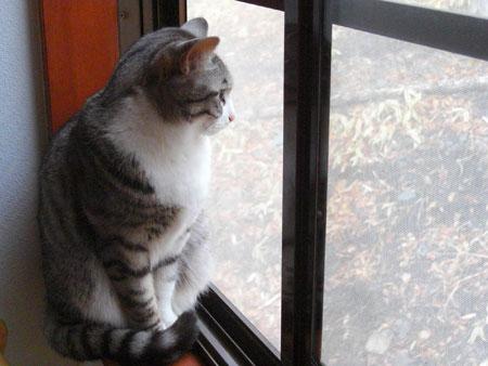 外を見るナナ