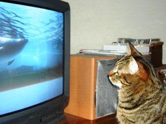 maron-tv