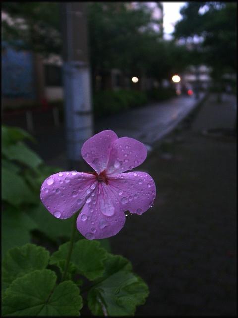 080605-01.jpg