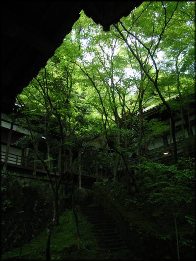 midori02.jpg