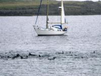 dolphininismor
