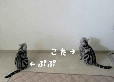 3_3aaa-(6).jpg