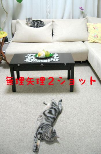 pupu_kota_559968771_012.jpg