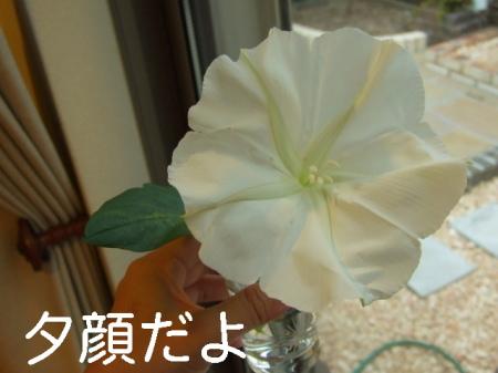 ma0723 (9)