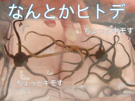 09natsuhukui (191)0000