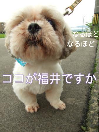 09natsuhukui (15)0000
