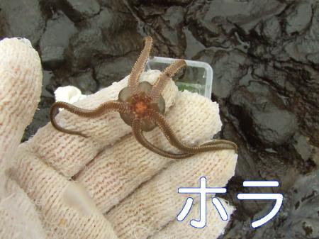 09natsuhukui (179)