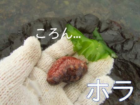 09natsuhukui (178)