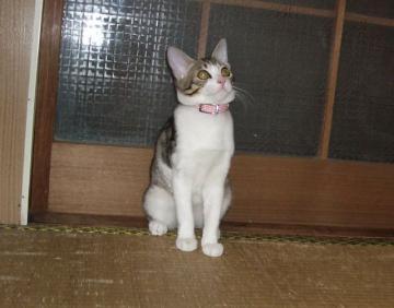 チビ猫07