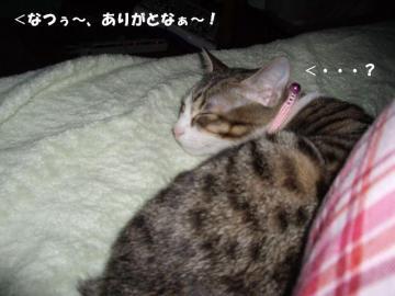 ちょこ02