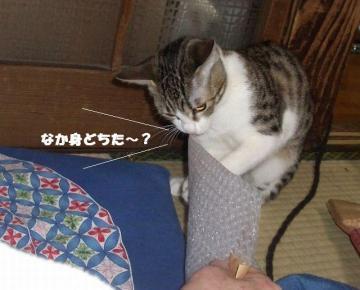 ぷちぷち04