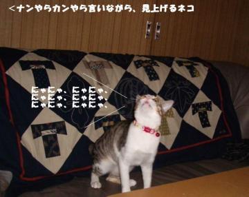 ちゅう闘04