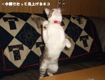 ちゅう闘05