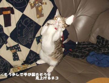 ちゅう闘08